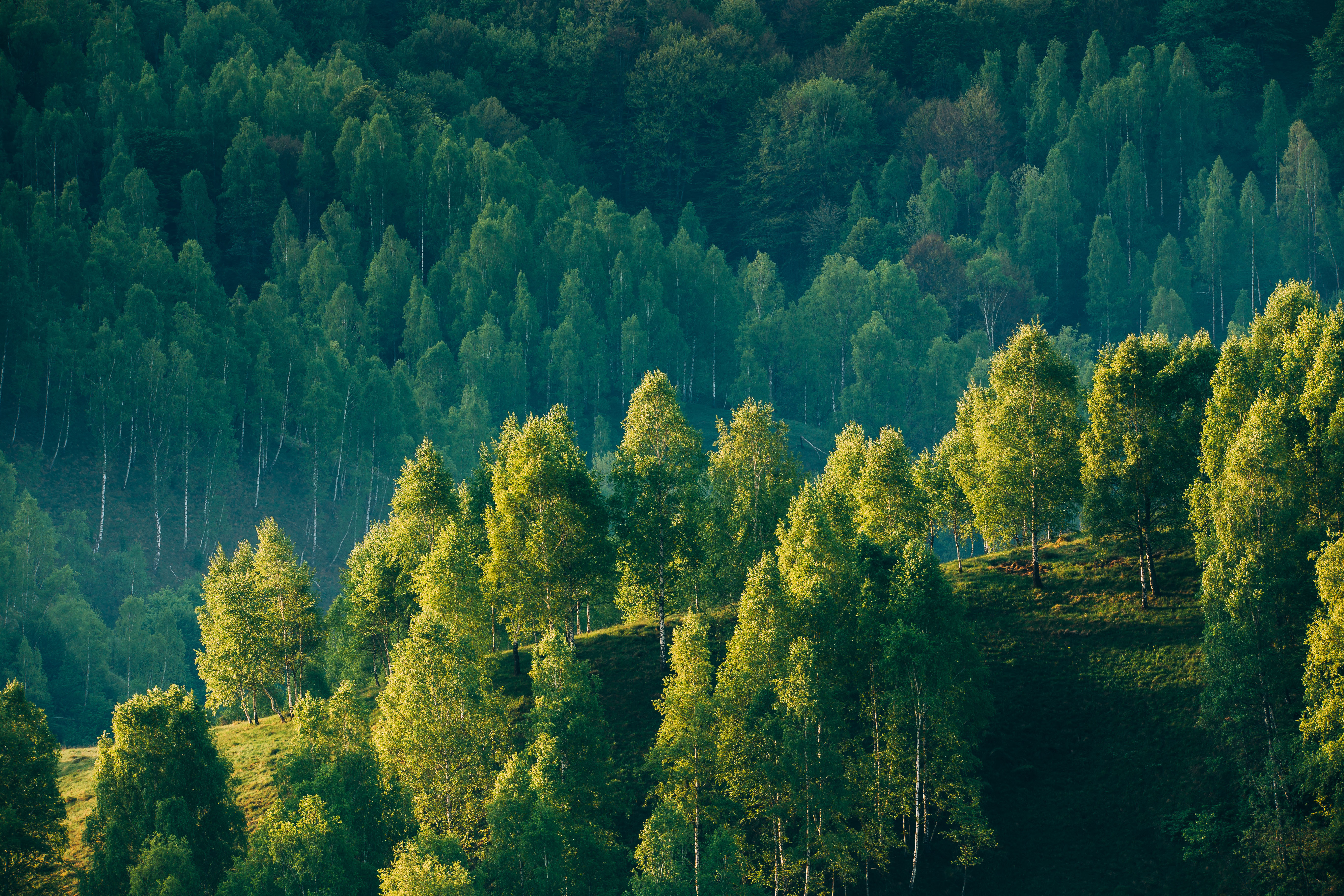 FSC Forest for sustainable forest use.